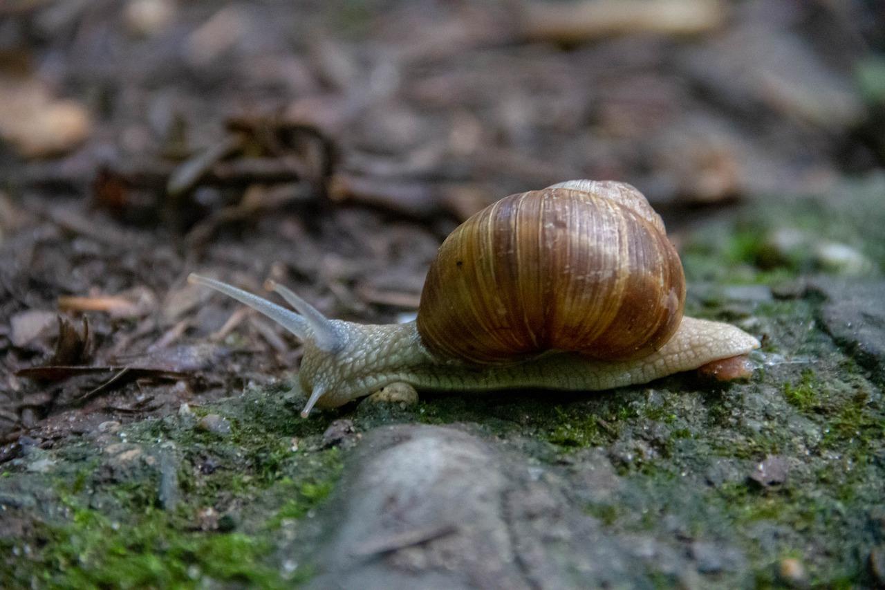 Biodiversidad amenazada