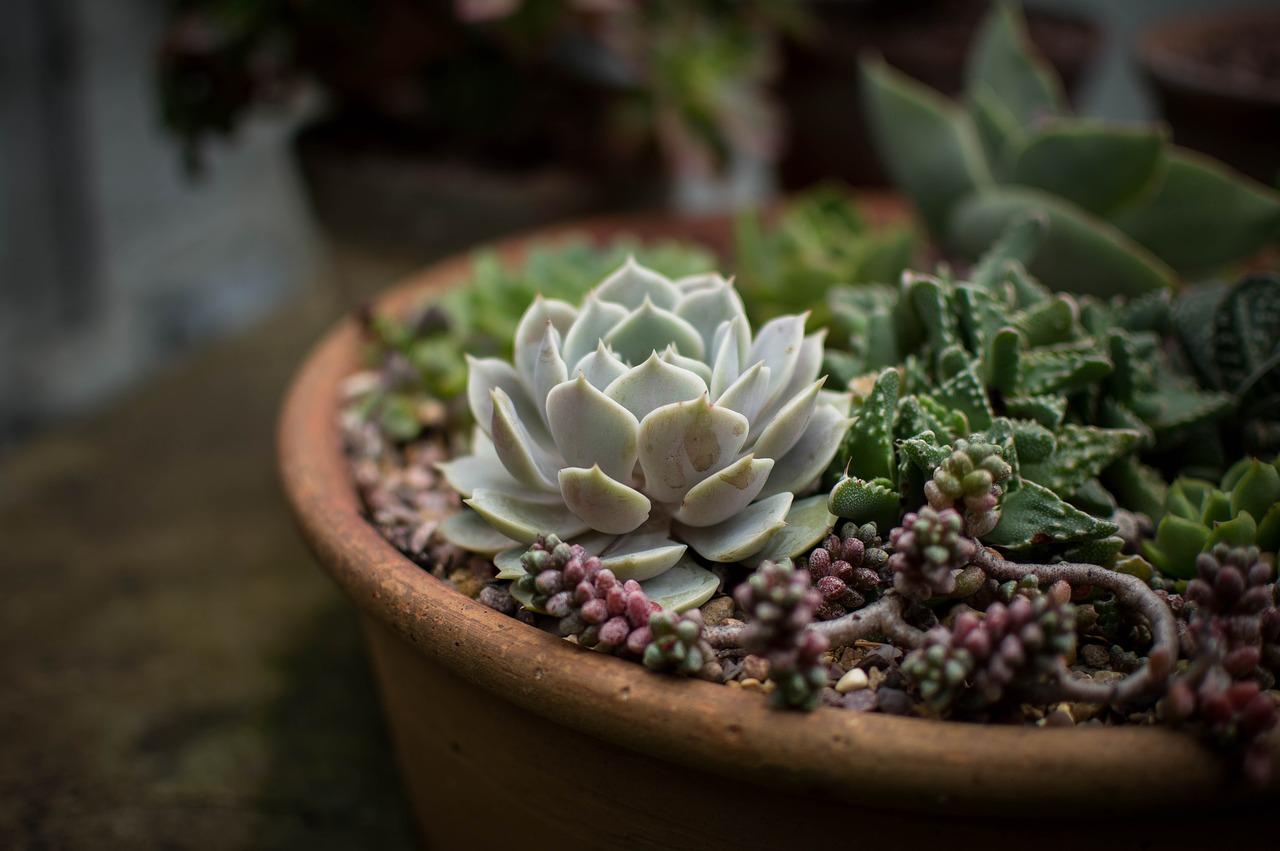 Cactus en peligro de extinción