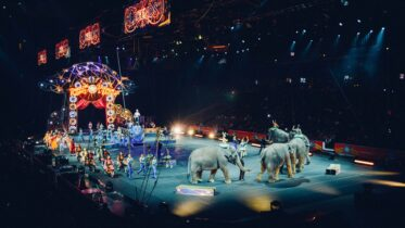 Cómo es la situación actual de los circos con animales en México