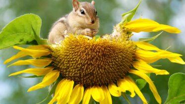 Cuál es la importancia de la conservación de la biodiversidad