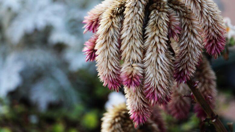Cuáles son algunas de las plantas de Yucatán