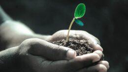 Cuáles son algunas de las plantas en peligro de extinción