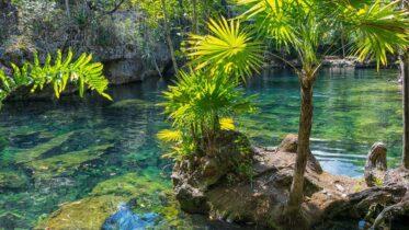 Cuáles son las características de un ecosistema de agua dulce