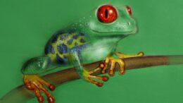 Cuáles son las especies exóticas invasoras