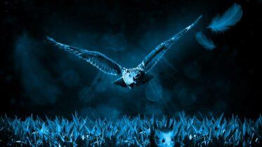 Cuáles son los animales nocturnos