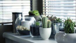 Cuáles son los cactus en peligro de extinción