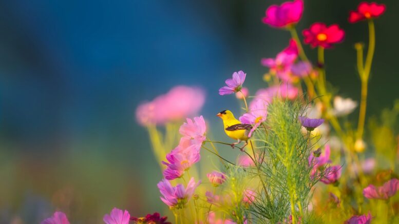 Cuando se celebra el Día Mundial de la Vida Silvestre