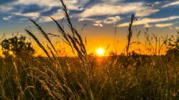 Importancia de la agricultura