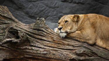 Cómo son los animales de zoológico