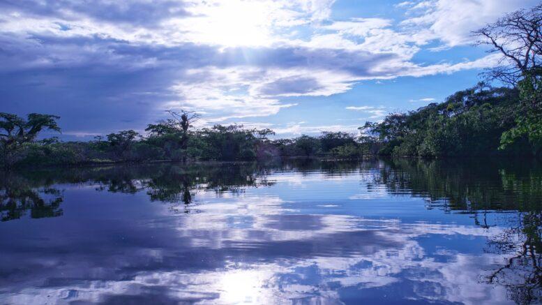 Peligrosos animales de la Amazonia