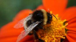 Por qué está la biodiversidad amenazada