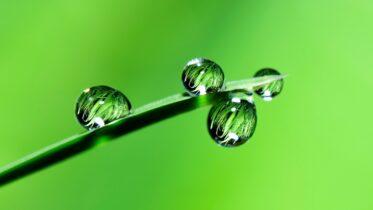 Qué es el hidrotropismo