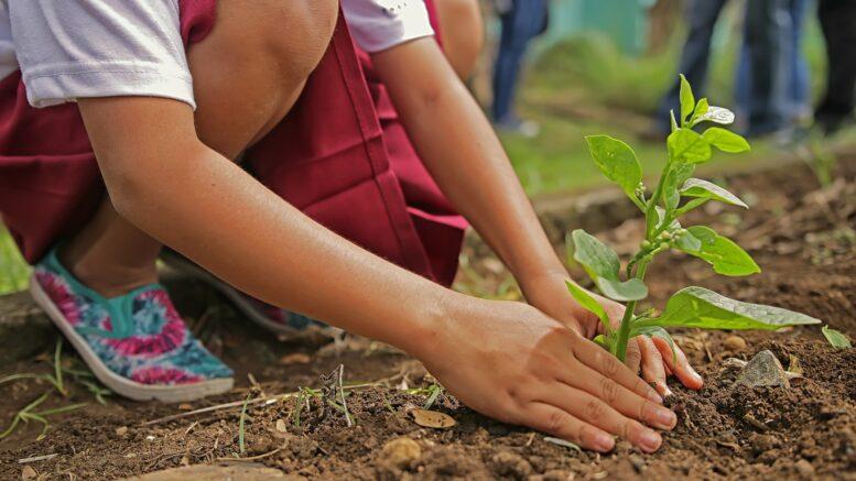Qué es la restauración ecológica