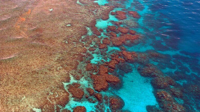 Qué hay en la Gran Barrera de Coral
