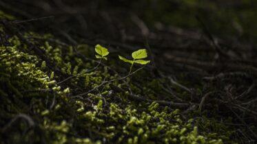 Qué puedo hacer para preservar los ecosistemas naturales de la región