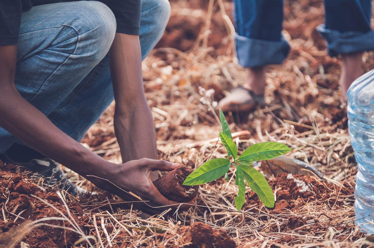 Recuperar los ecosistemas