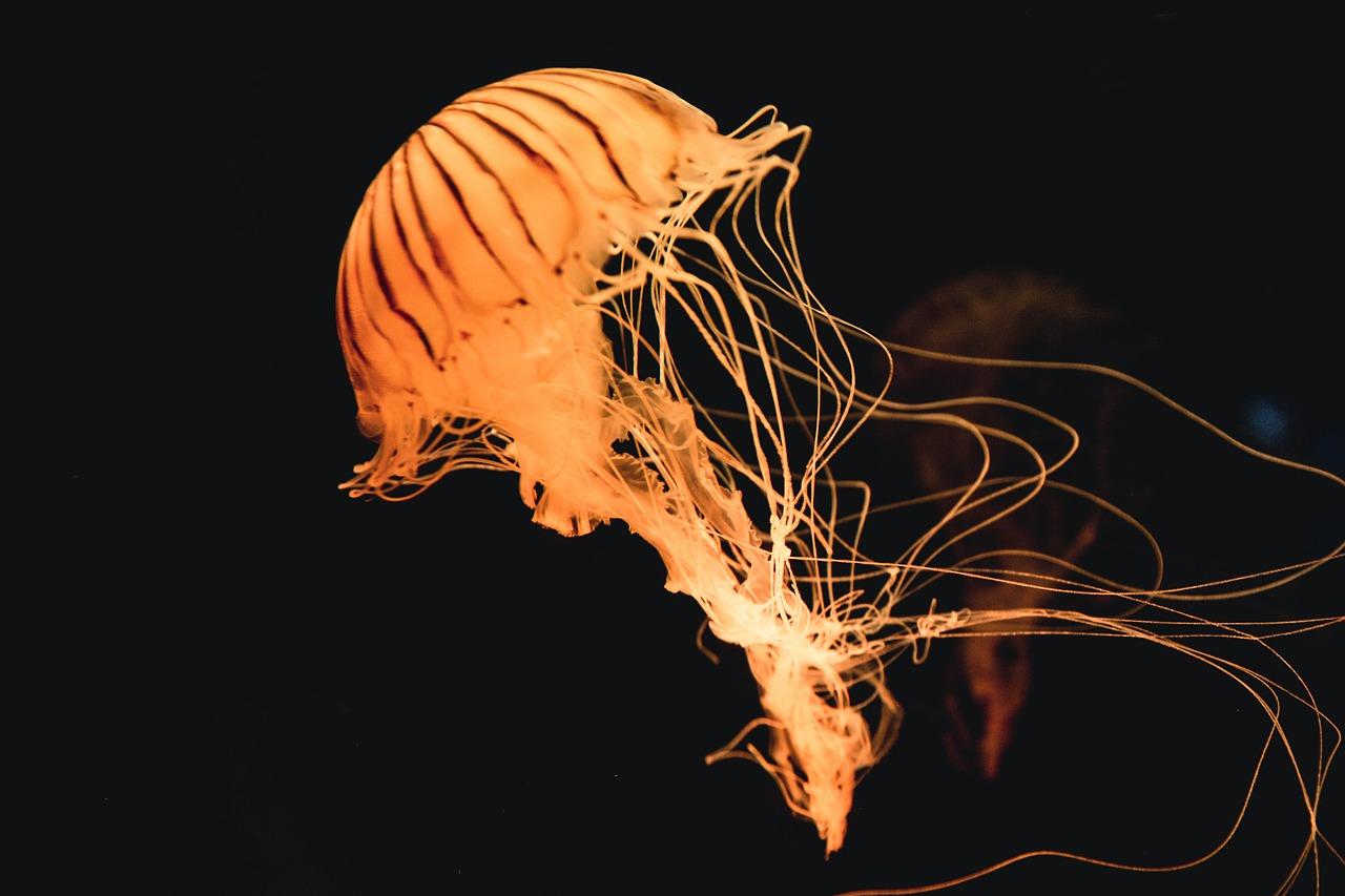 Tentáculos de una medusa